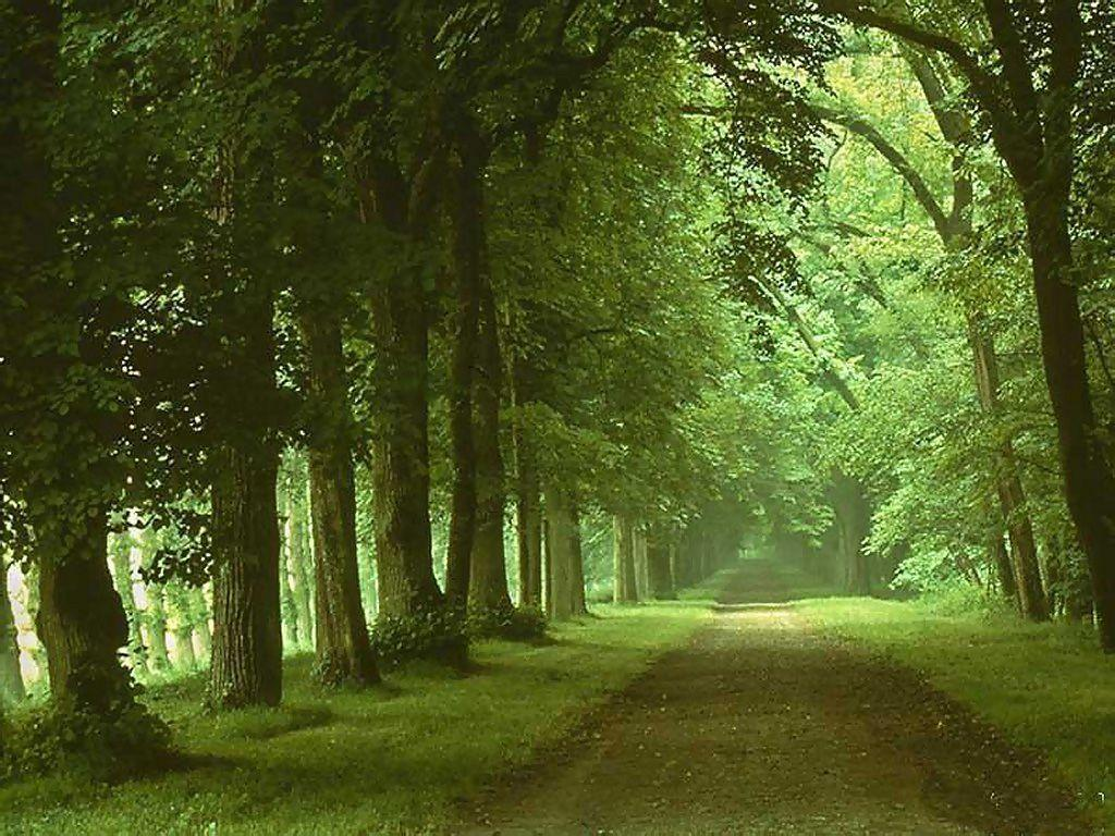 Pc nature wallpaper - Nature Wallpaper For Pc Viewing Gallery