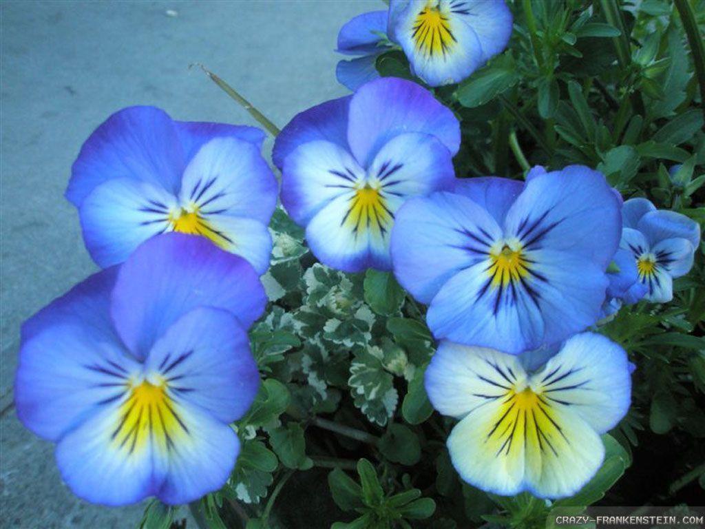 Beautiful flowers wallpapers wallpaper cave download blue beautiful flowers wallpaper full hd wallpapers izmirmasajfo