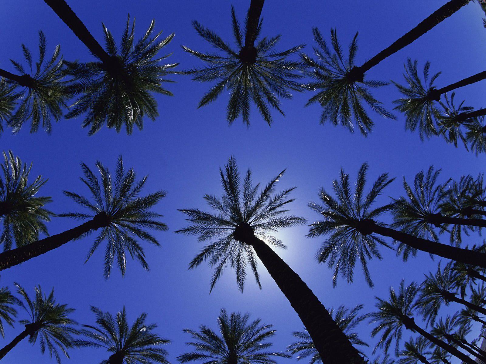 California Tumblr Photography Palm Trees Widescreen 2 HD
