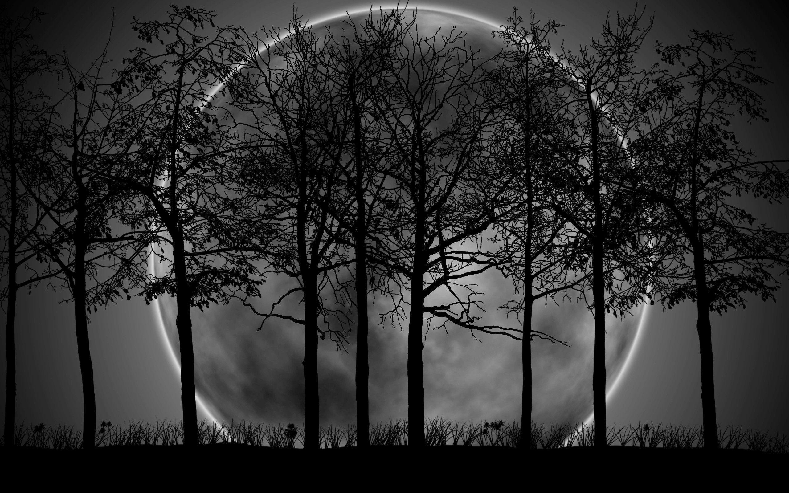Dark Forest Moon Widescreen Background Wallpaper - HD Wallpapers