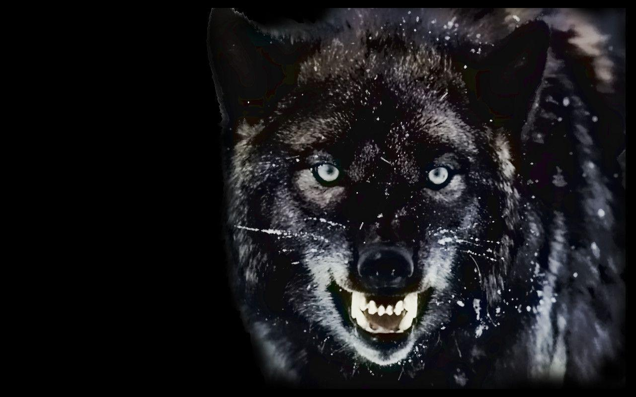 black wolf computer wallpapers - photo #16