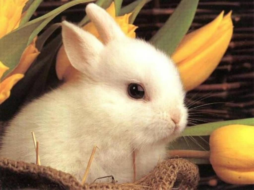 free bunny wallpapers wallpaper cave