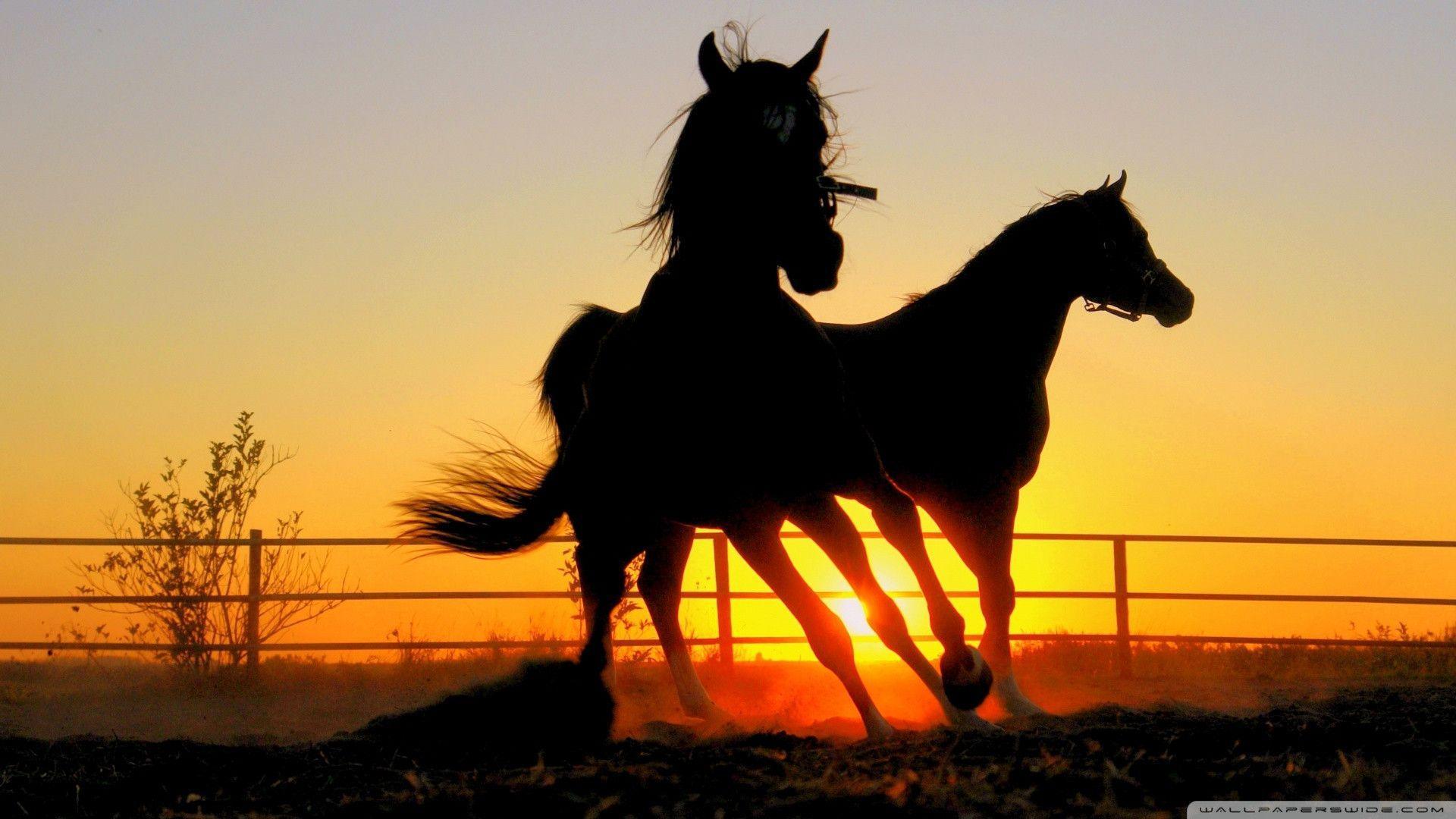 horses running in the sunset wallpaper