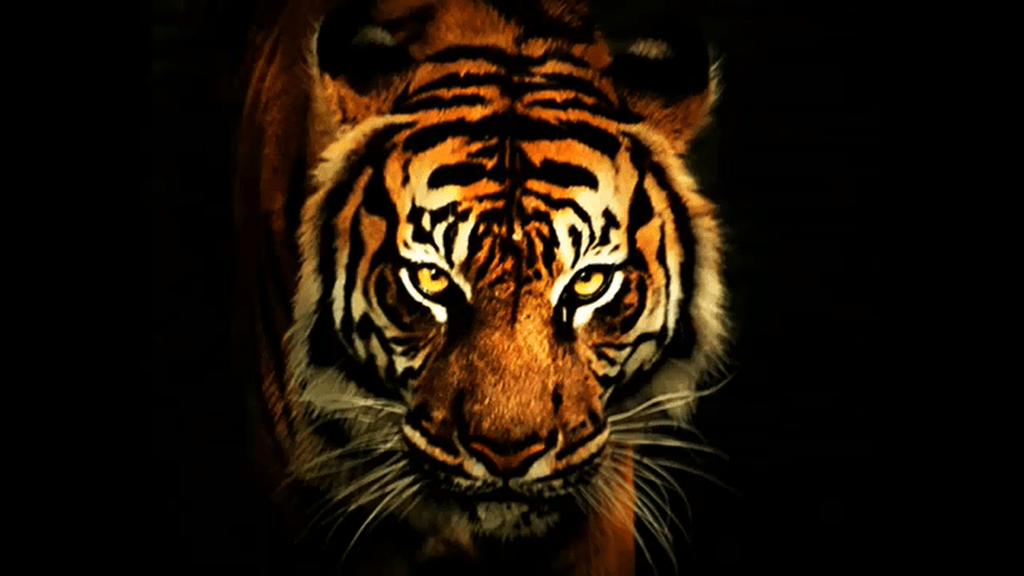 Oktaha High School I am a TIGER. I am Tenacious in pursuit of my goals. I act with Integrity and show Gratitude in my daily life. I have high Expectations for myself and others, and I show Respect through my actions and words. I am a TIGER.