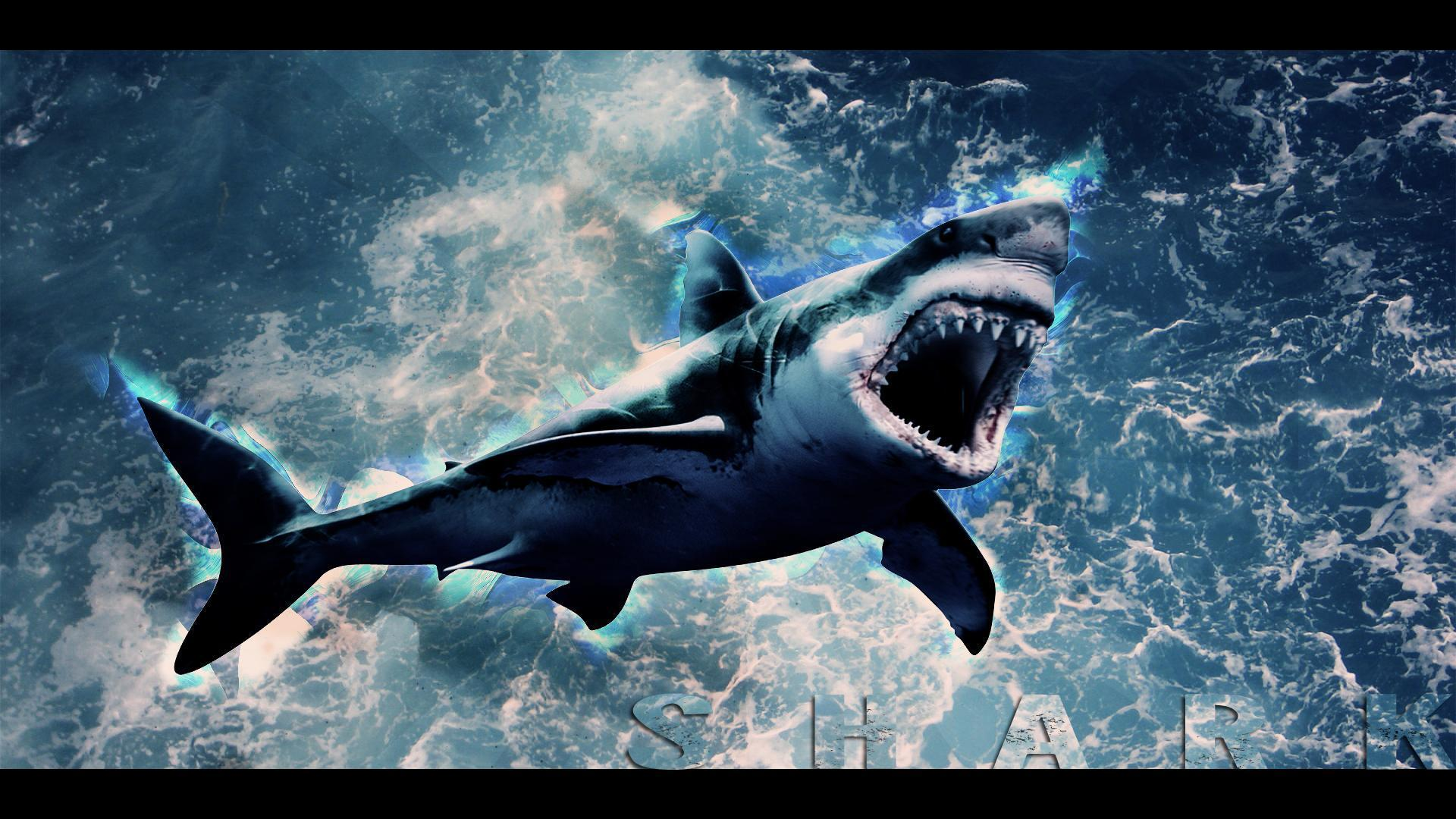 Shark Wallpapers - Wallpaper Cave