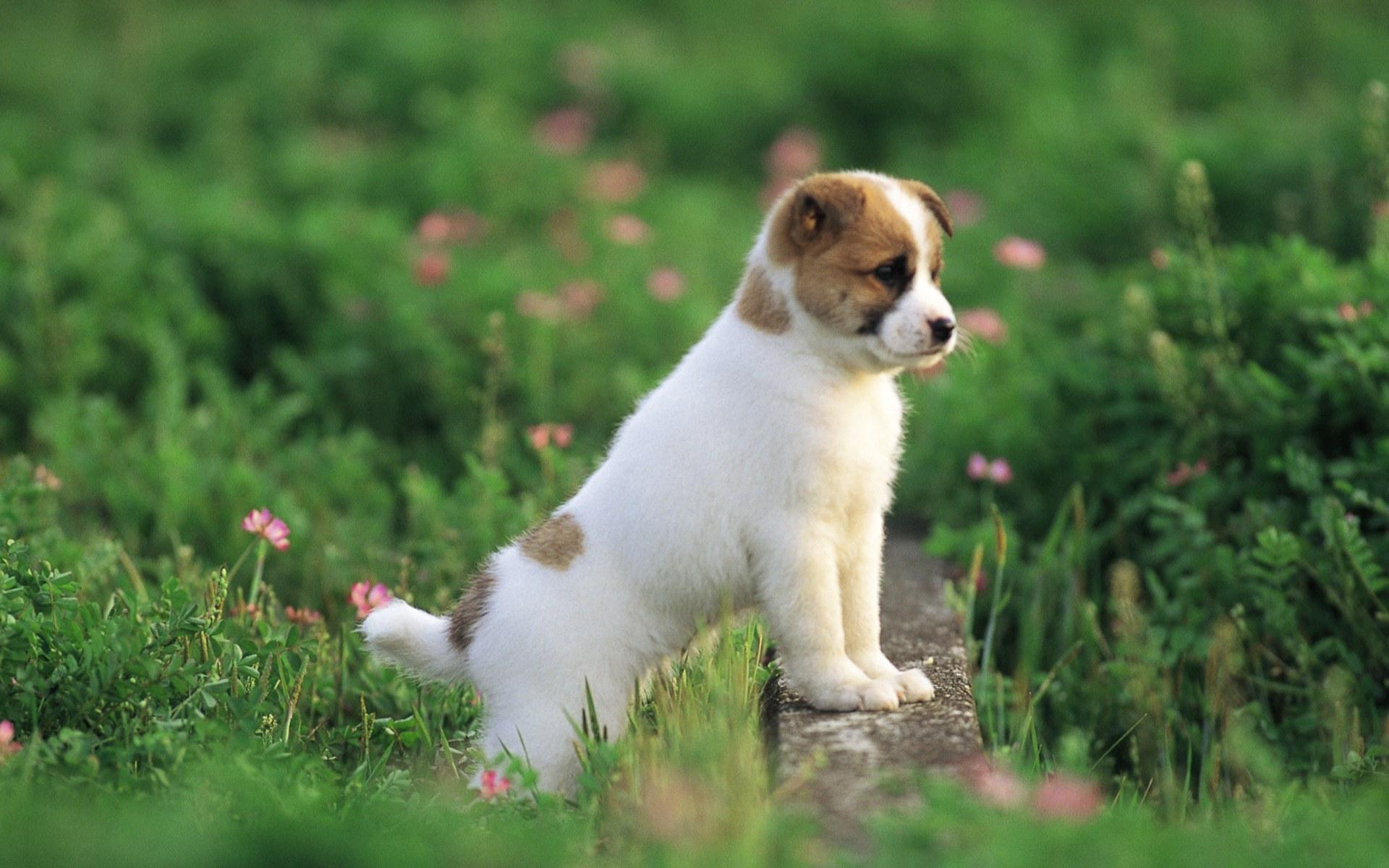 Preety Dog HD Wallpapers