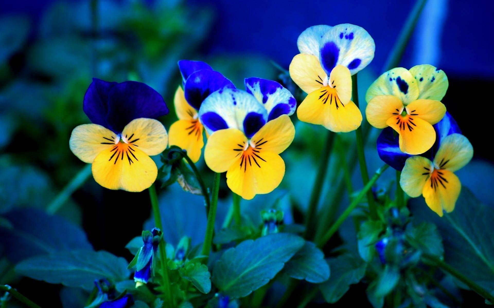 Free spring flower wallpapers wallpaper cave blue yellow spring flowers wallpaper desktop free free download mightylinksfo