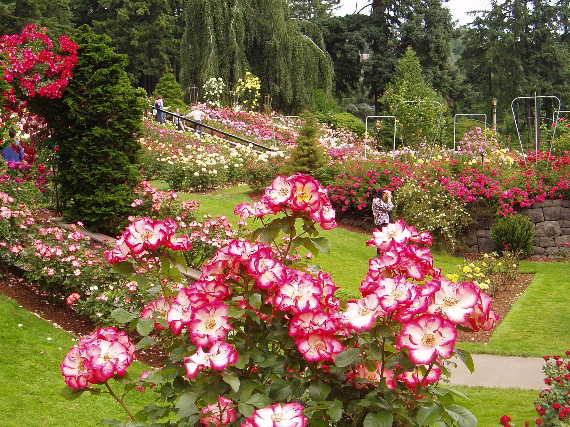 Portland Rose Garden Wallpaper 692412 Fanpop