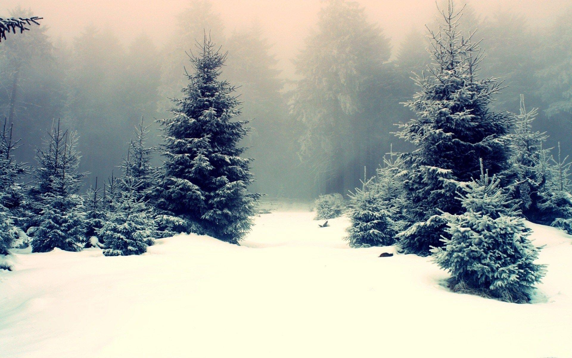Winter Trees Wallpapers Wallpaper