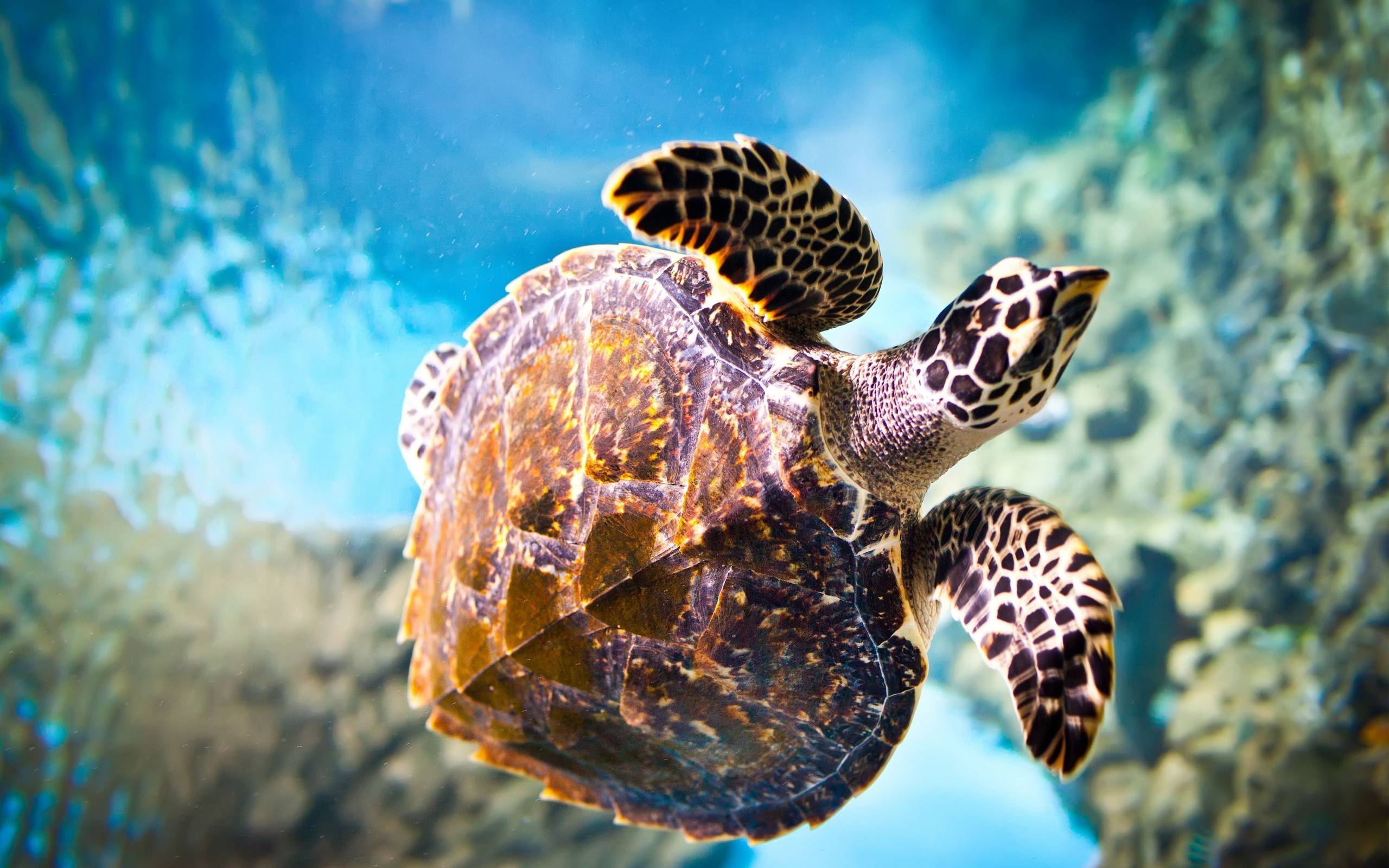 Turtle Image Wallpapers Wallpapers computer