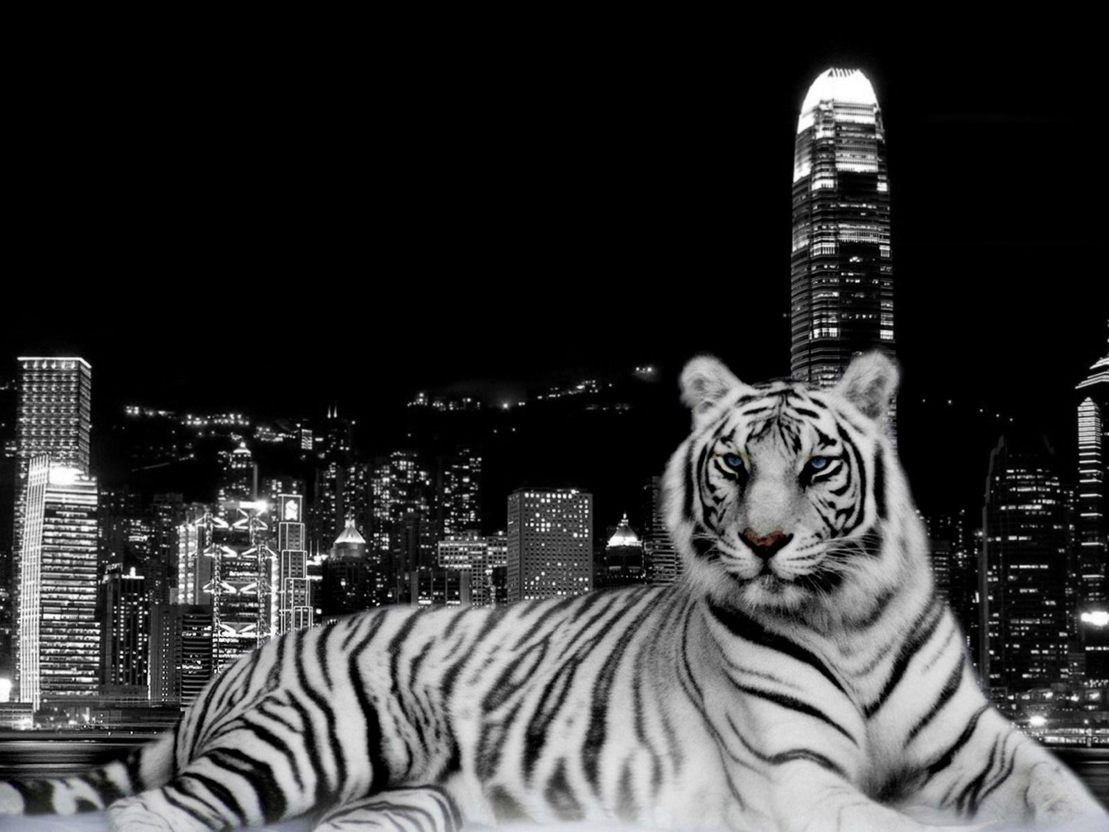 desktop 3d white tiger - photo #18