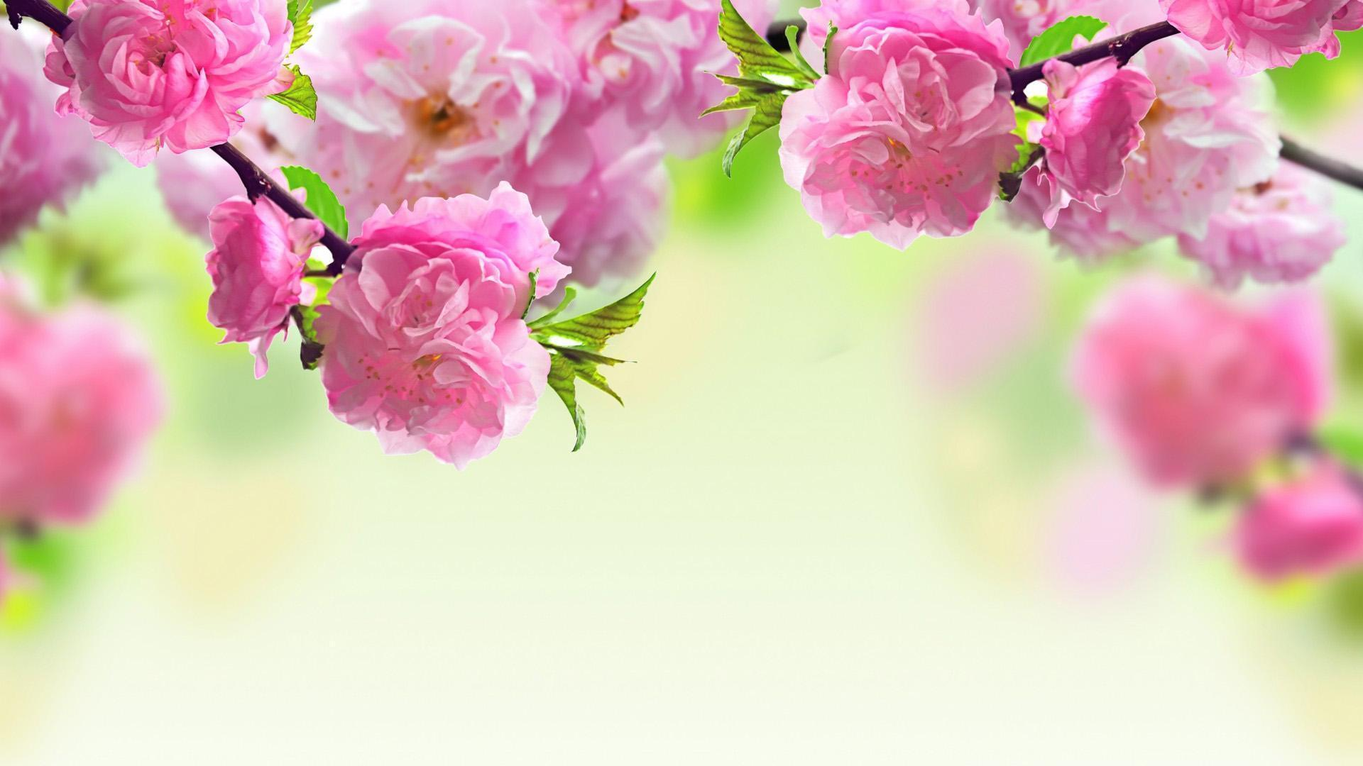 Desk Top Wallpaper Spring