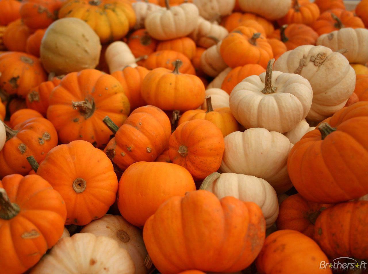 Pix For > Free Pumpkin Desktop Backgrounds