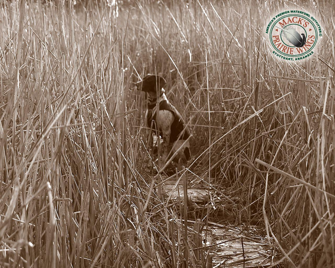 duck hunting camo backgrounds - photo #22