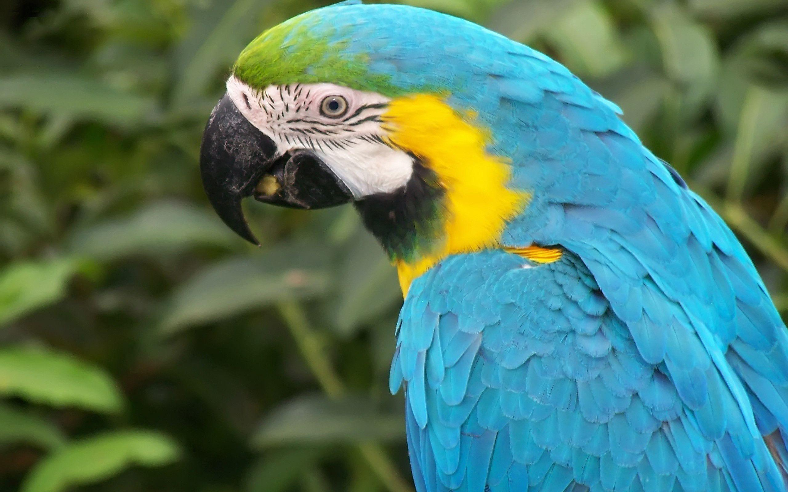 Blue Macaw Parrot Wallpapers | Pictures