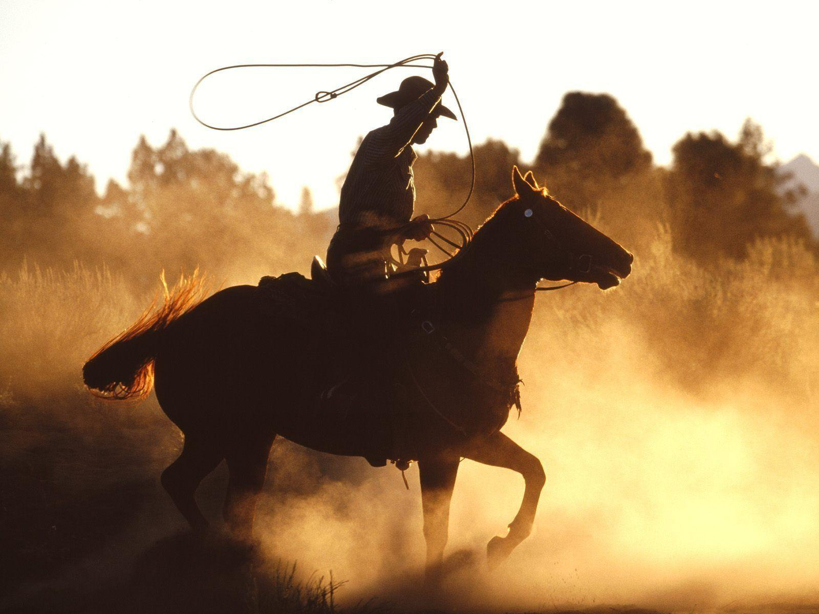 rodeo wallpapers wallpaper cave