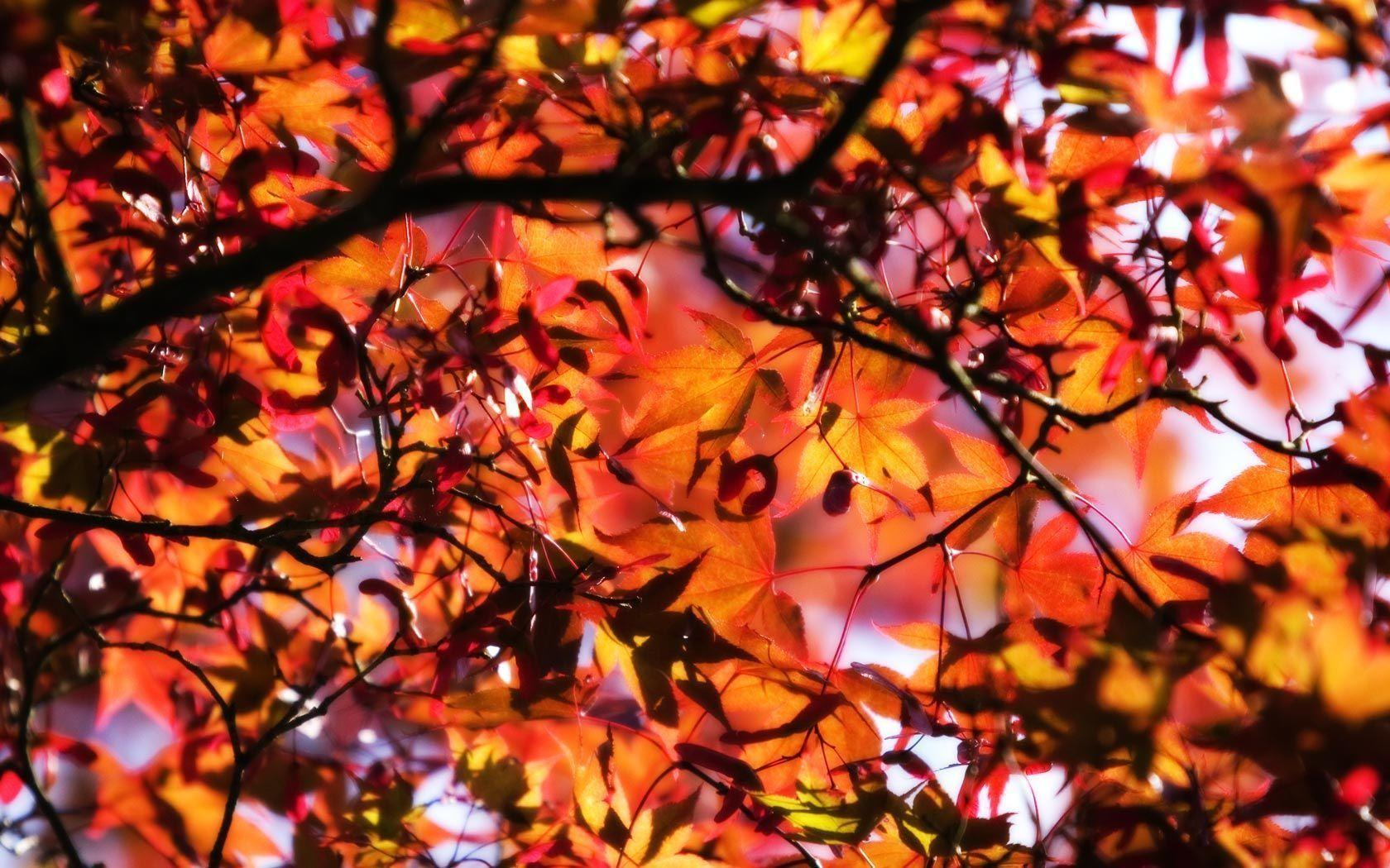 Cool Fall Backgrounds