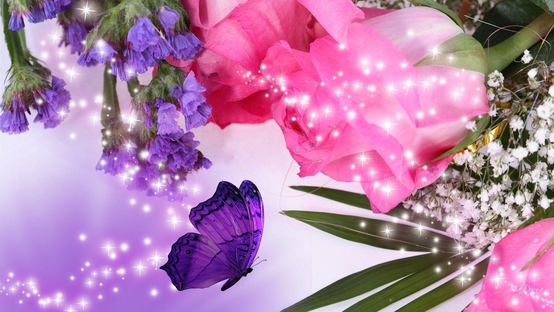 Purple Roses Background Images: Pink Rose Flower Wallpapers