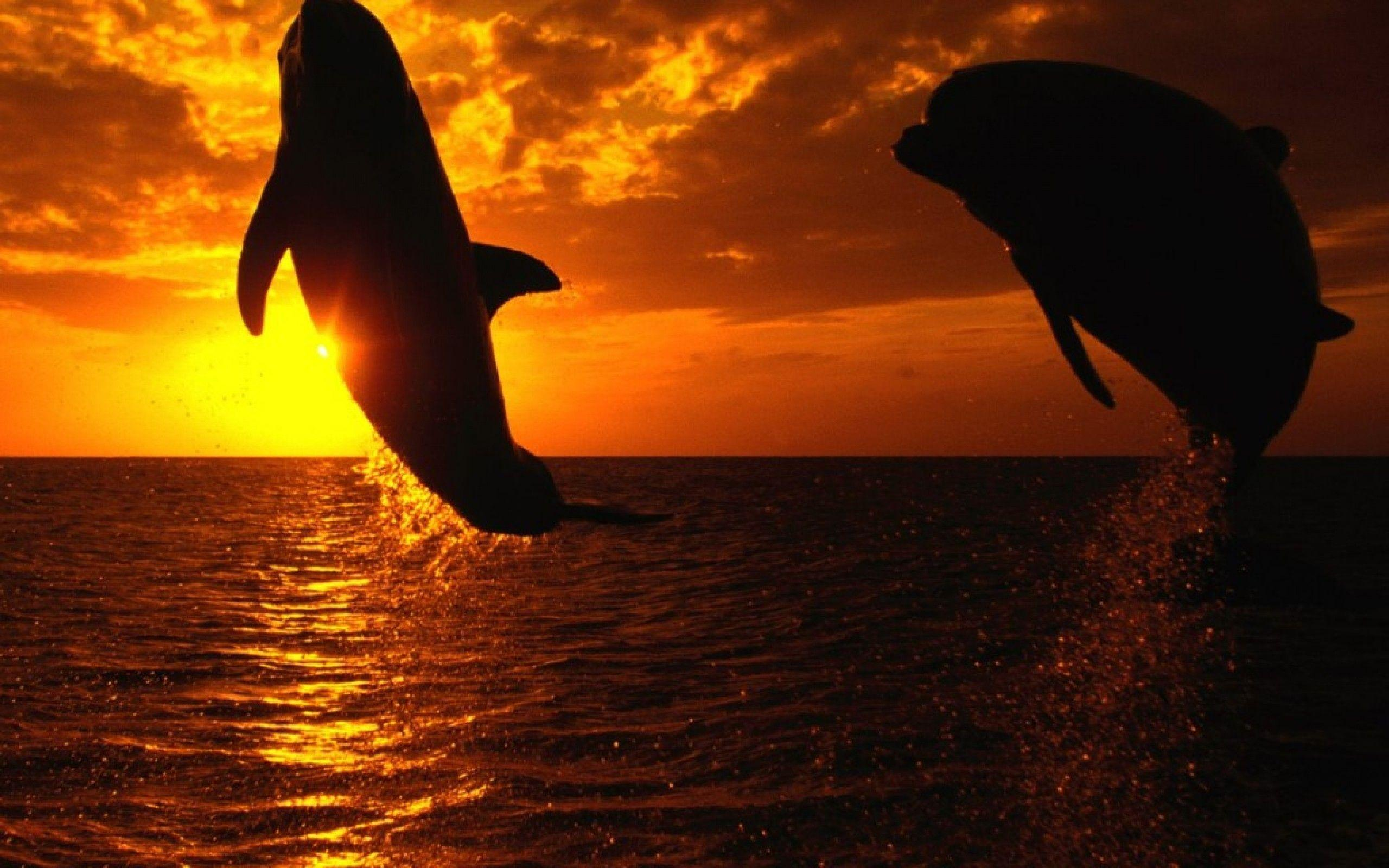 Orca wallpaper - Animal Backgrounds