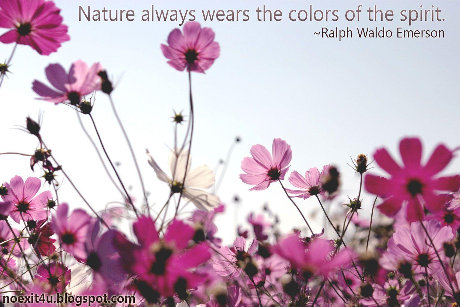 NATURE QUOTES WALLPAPER ~ noexit4u.