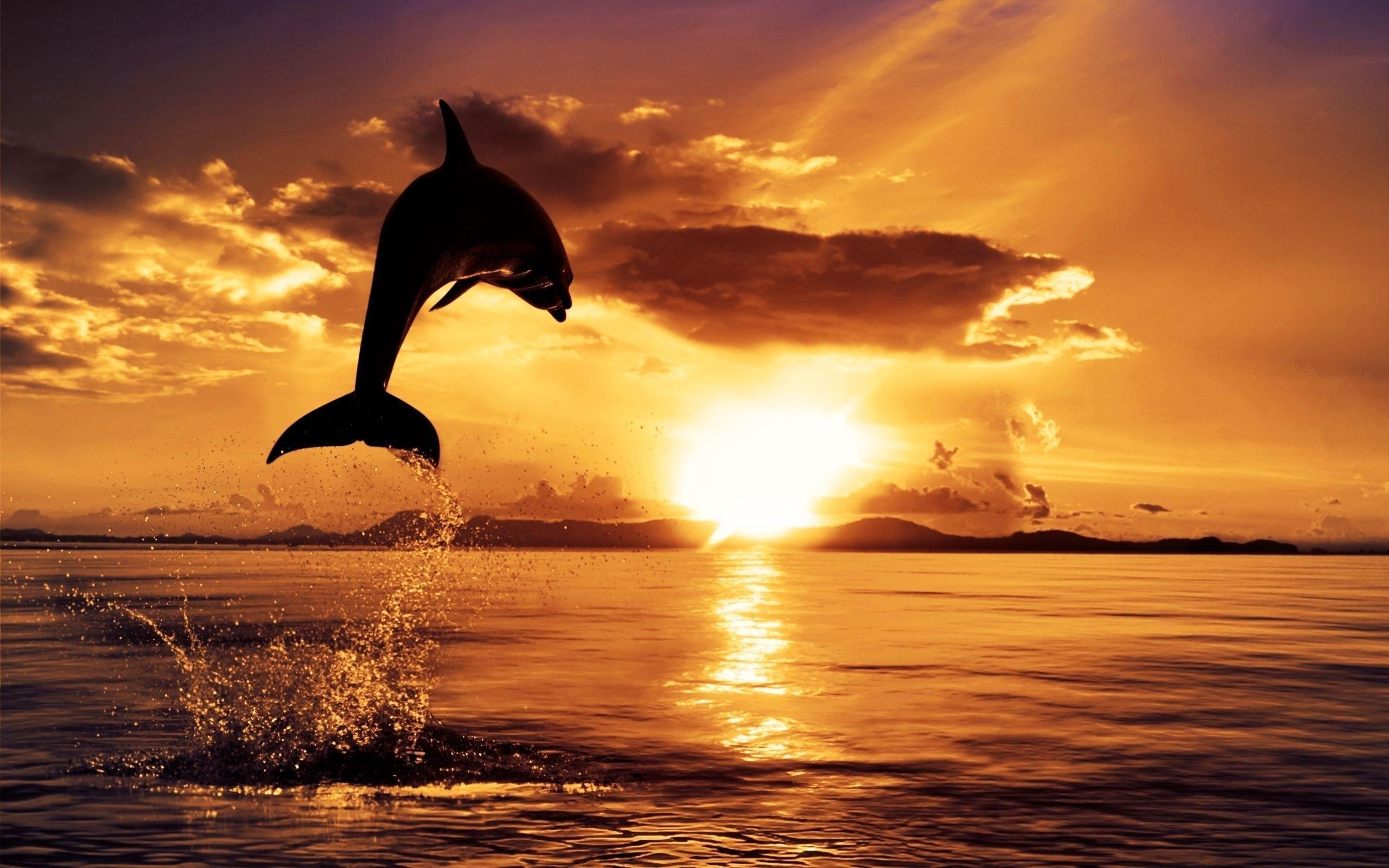free dolphin desktop wallpapers wallpaper cave