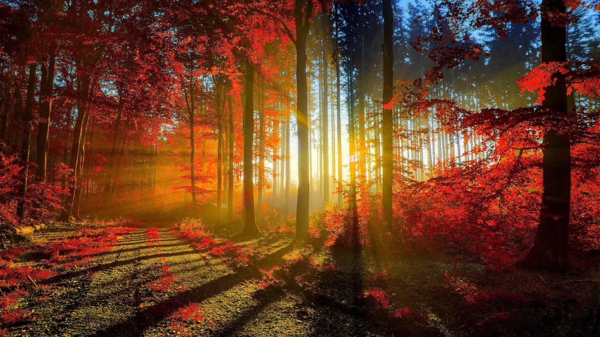 Free Autumn Scenic Wallpaper
