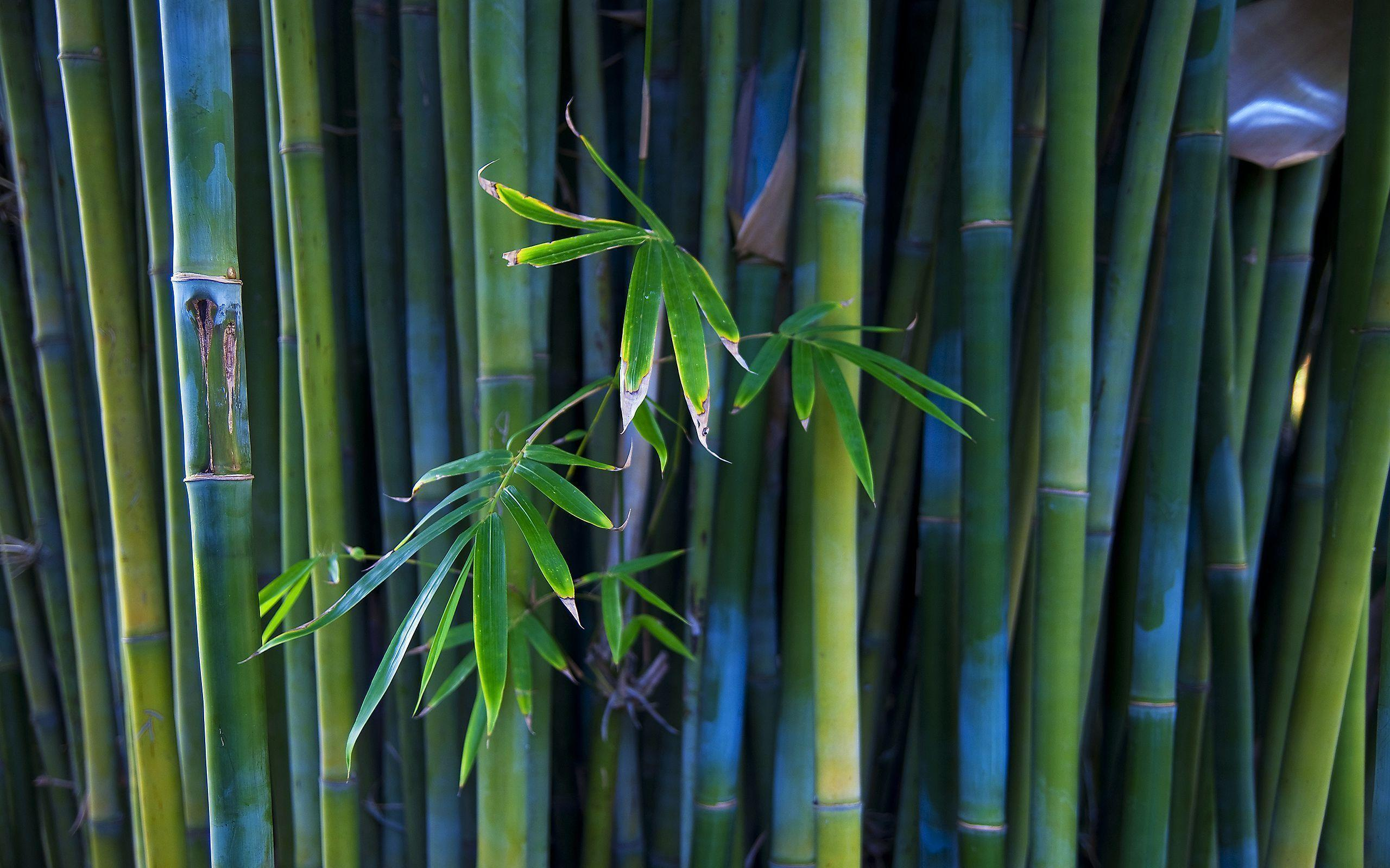 green bamboo wallpapers wallpaper cave