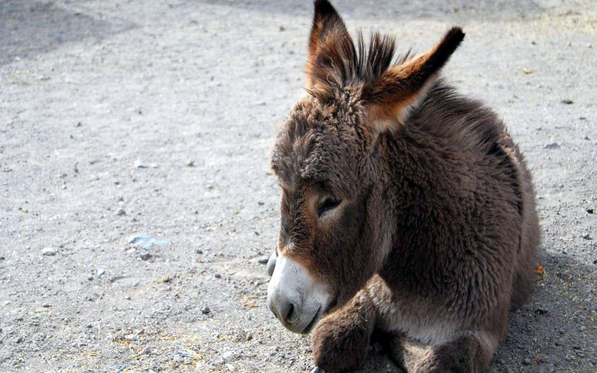 Baby Donkey Cartoon Wallpaper