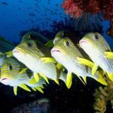 Fish Desktop Backgrounds