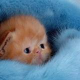 Funny Kittens Wallpapers