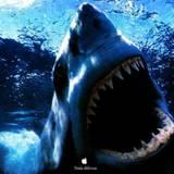 HD Shark Wallpaper