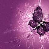 Wallpapers Butterflies
