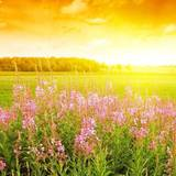 Field Of Flowers Wallpaper