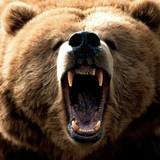 Grizzly Bear Backgrounds