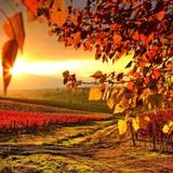 Autumn Full HD Wallpapers