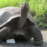Tortoise Wallpapers