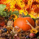 Thanksgiving Holiday Wallpapers