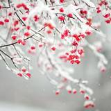 Winter Flowers Wallpapers