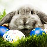 Easter Bunny HD Wallpapers