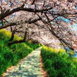 Spring Nature HD Wallpapers