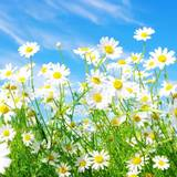 Spring Flowes Wallpapers
