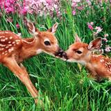 Cute Baby Animals Spring Wallpapers