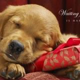 Dog Christmas Wallpapers