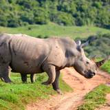 Animal Rhino HD Wallpapers