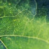 Leaf Macro HD Wallpapers