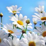 Pretty Summer Flowers Wallpapers