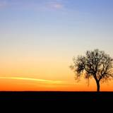 Lone Tree Silhouette Wallpapers