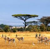 Kenya Animals Wallpapers