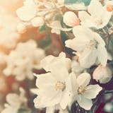 Aesthetic Spring Flowers Wallpapers