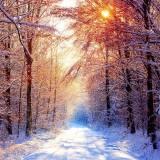 Winter Snow Scenes Wallpapers